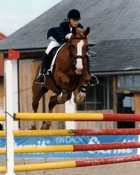 No, this picture of me and the Haflinger-Arabian Rubi in a novice (A) level show jumping test is not a photomontage!