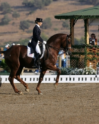 2002: Countless achievements in dressage rings by Rubinstein, Rohdiamant, Royal Diamond, Don Gregory, etc. were crowned by Olympic team bronze for Relevant under Lisa M. Wilcox/USA.